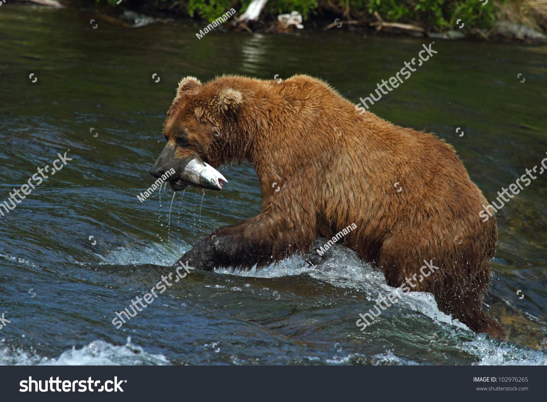 微信动物动态大灰熊图片
