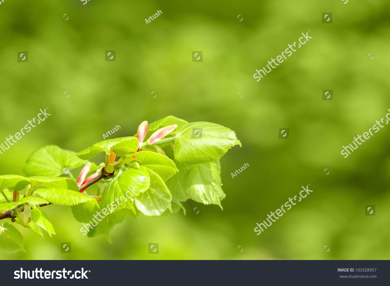 春天的手工制作树叶图片
