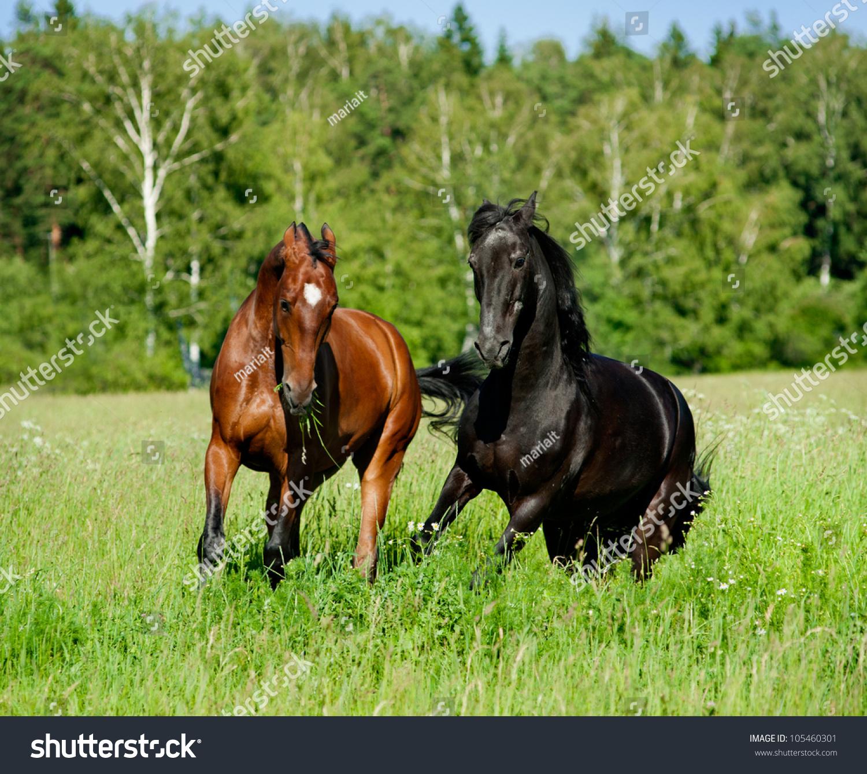 马自由发挥-动物/野生生物,自然-海洛创意(hellorf)-.