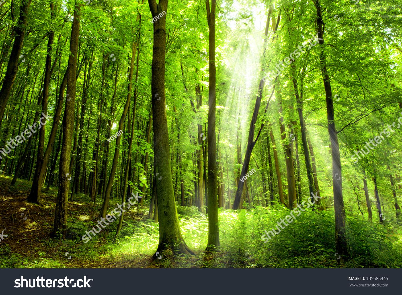 森林的树木.自然绿色木阳光背景.-自然,公园/户外-()