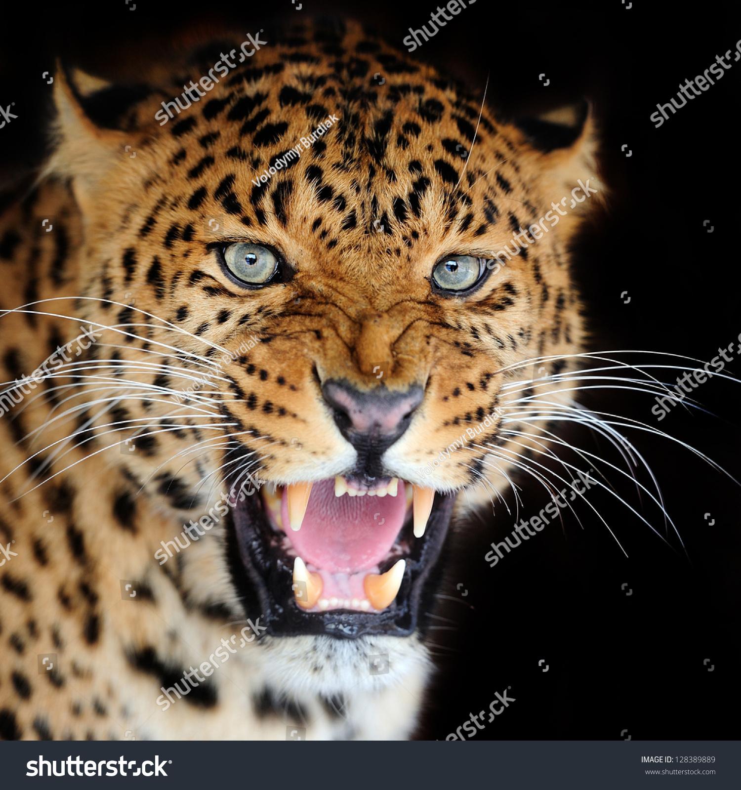 微信动物虎头像