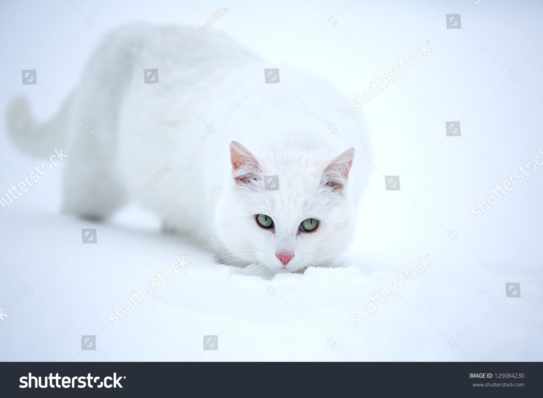 白猫在雪地里行走-动物/野生生物-海洛创意(hellorf)