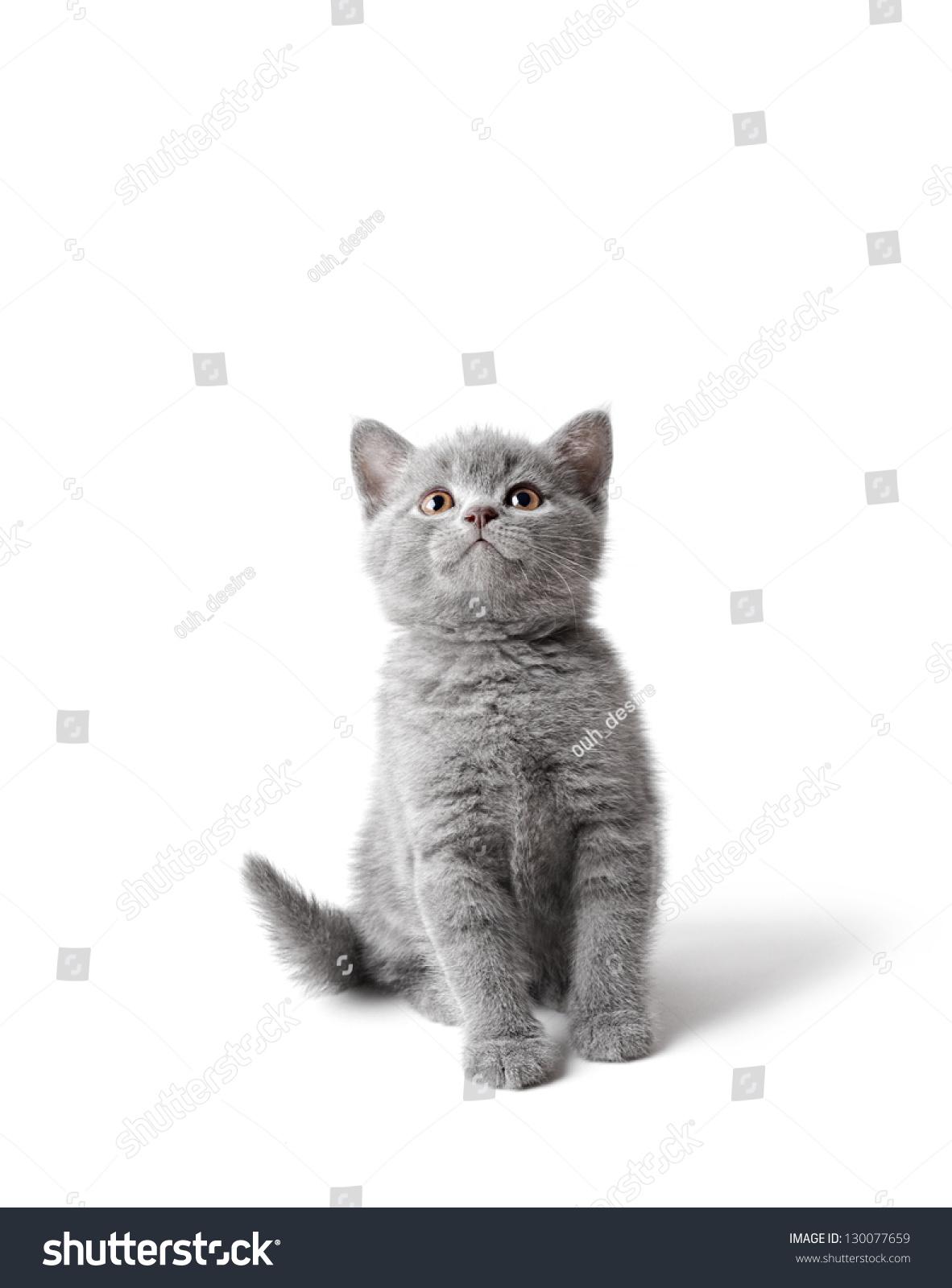 创意树叶粘贴画动物小猫