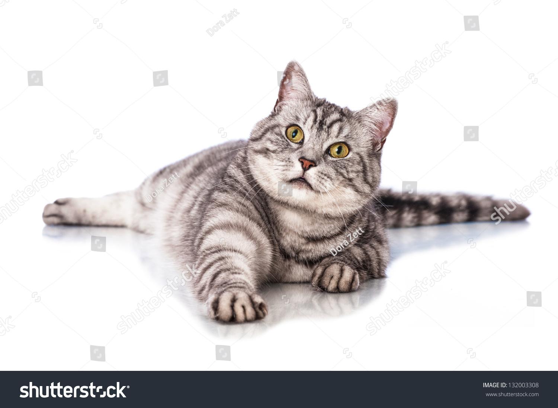 卧猫-动物/野生生物-海洛创意(hellorf)-shutterstock