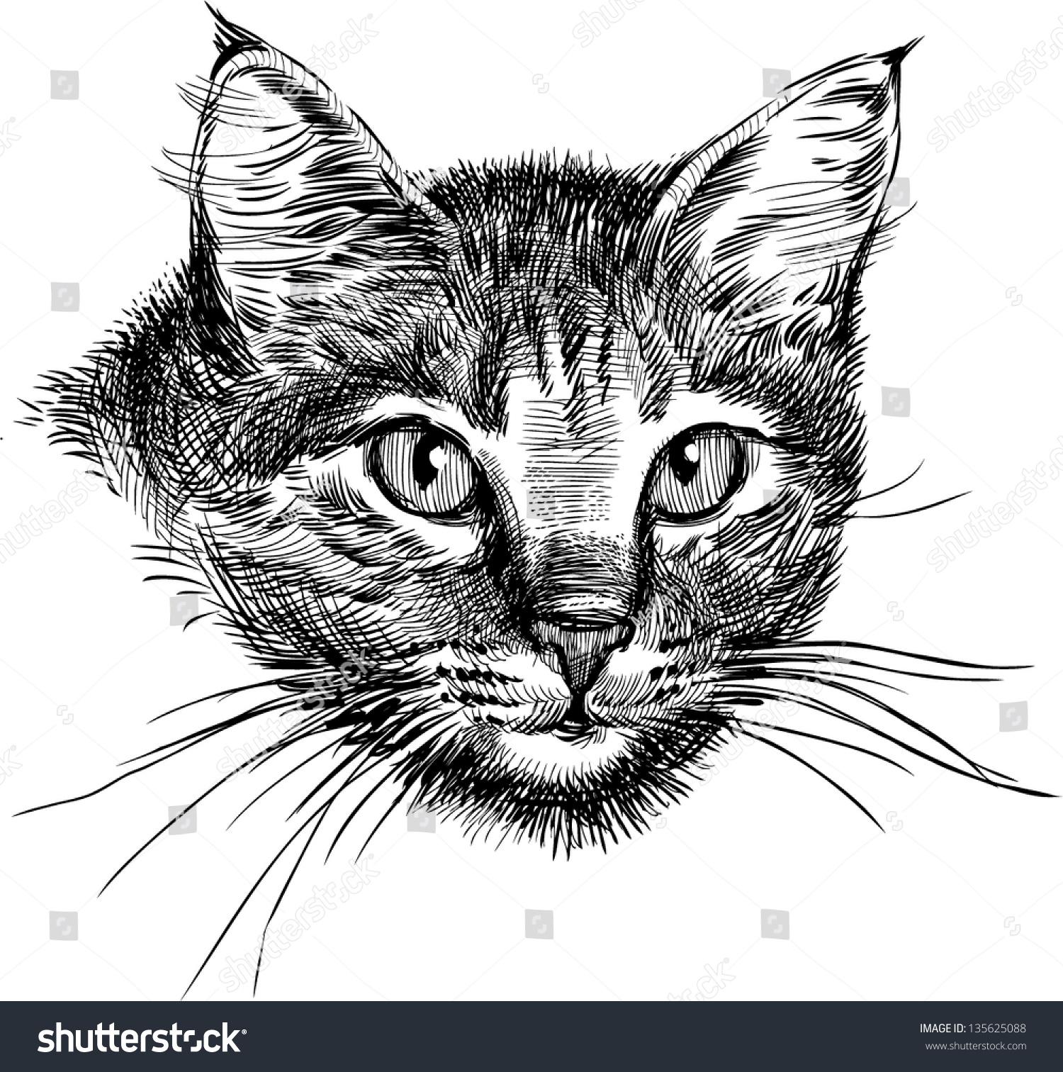 的猫-动物/野生生物,自然-海洛创意(hellorf)-中国