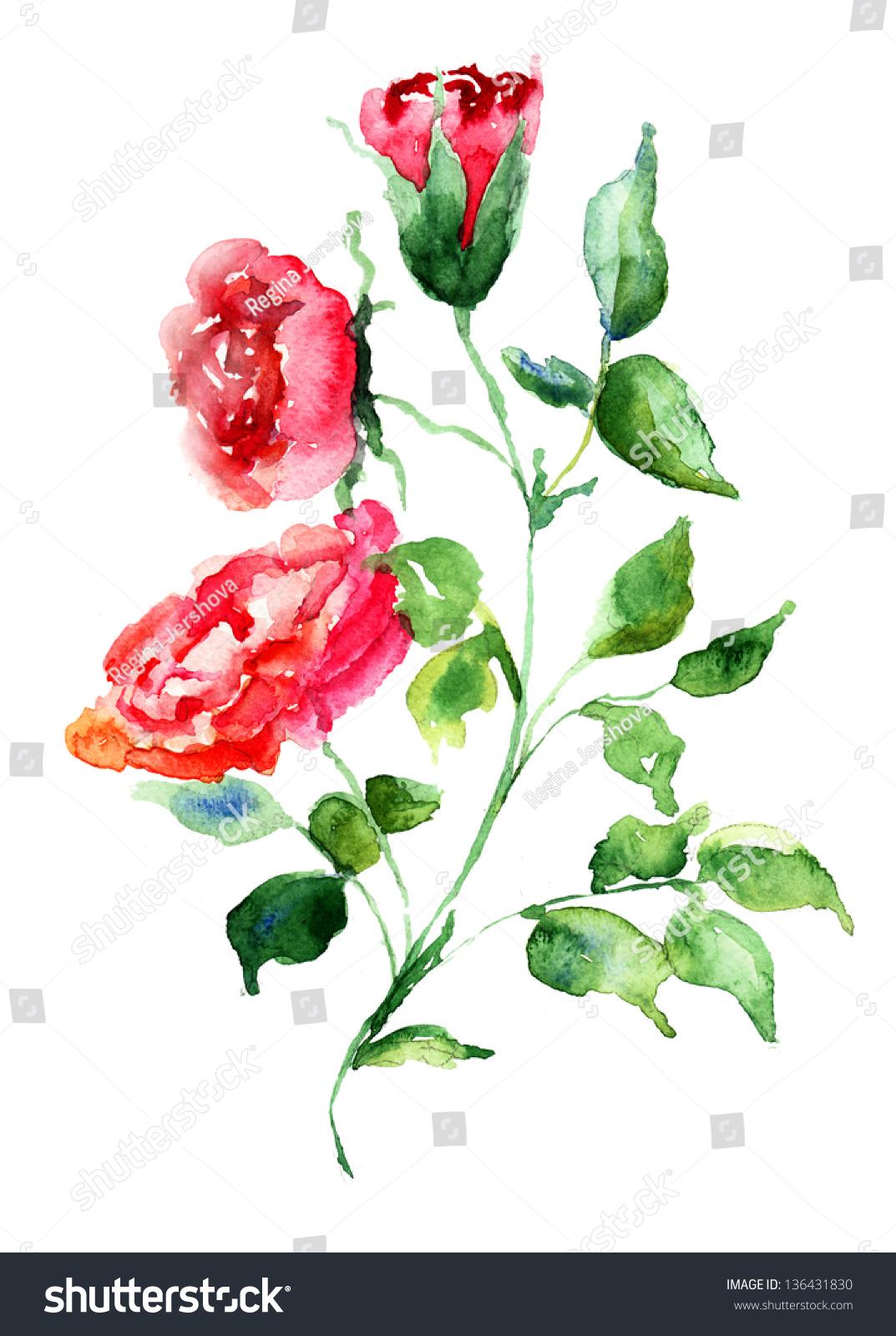 玫瑰花朵,水彩插图