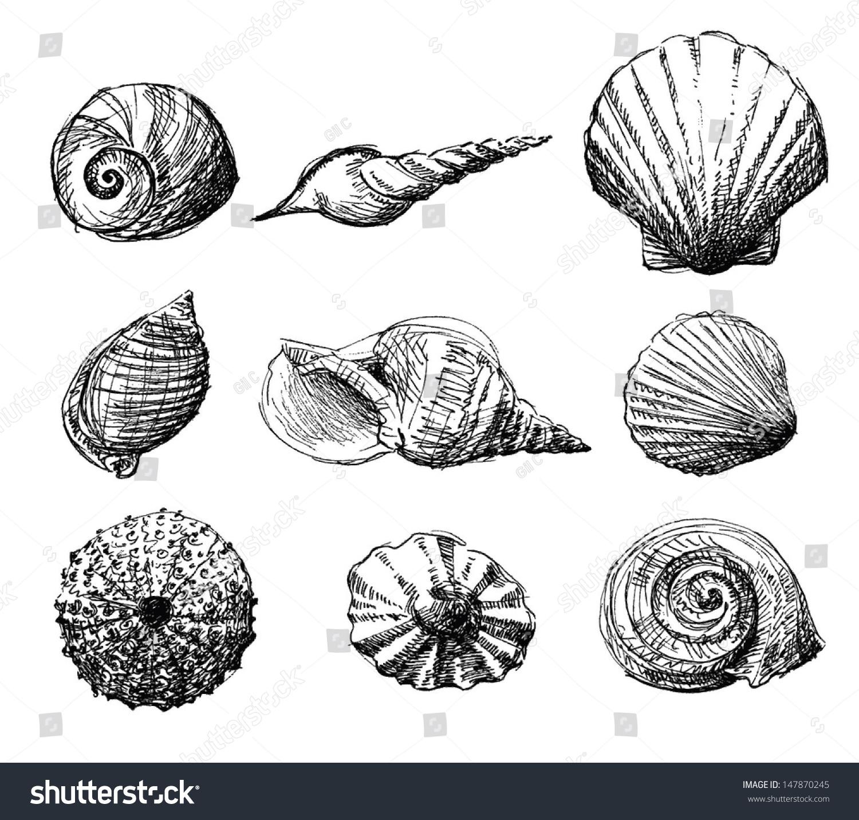 手绘各种海贝的插图.孤立在白色背景上