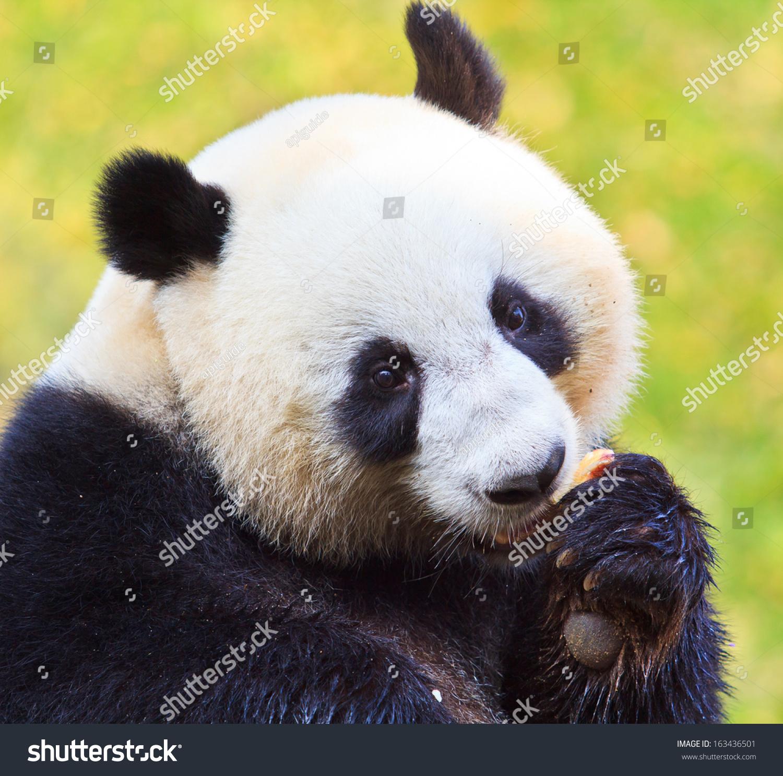 微信自然风景头像 可爱动物