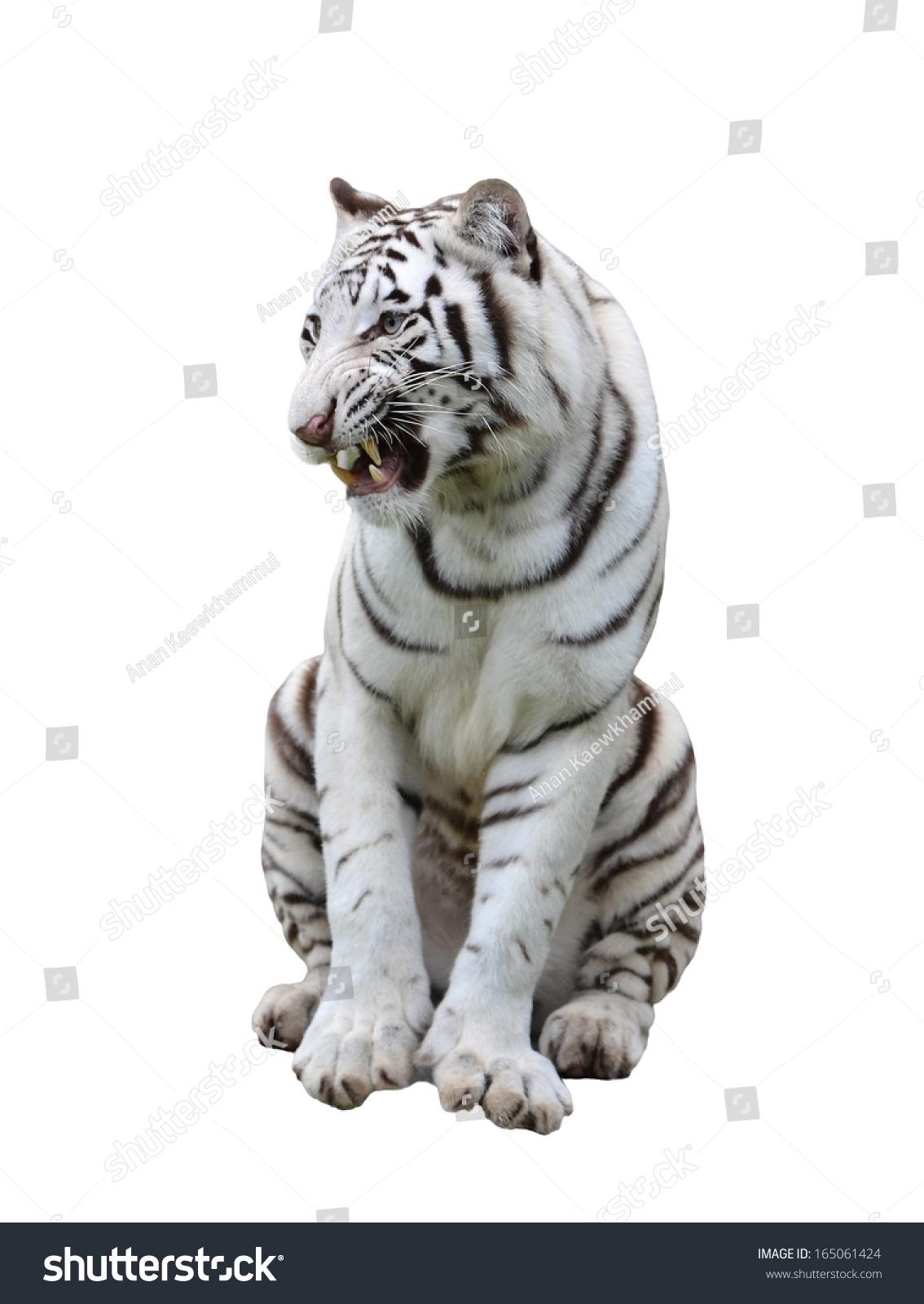 ppt图片可爱动物图片小老虎