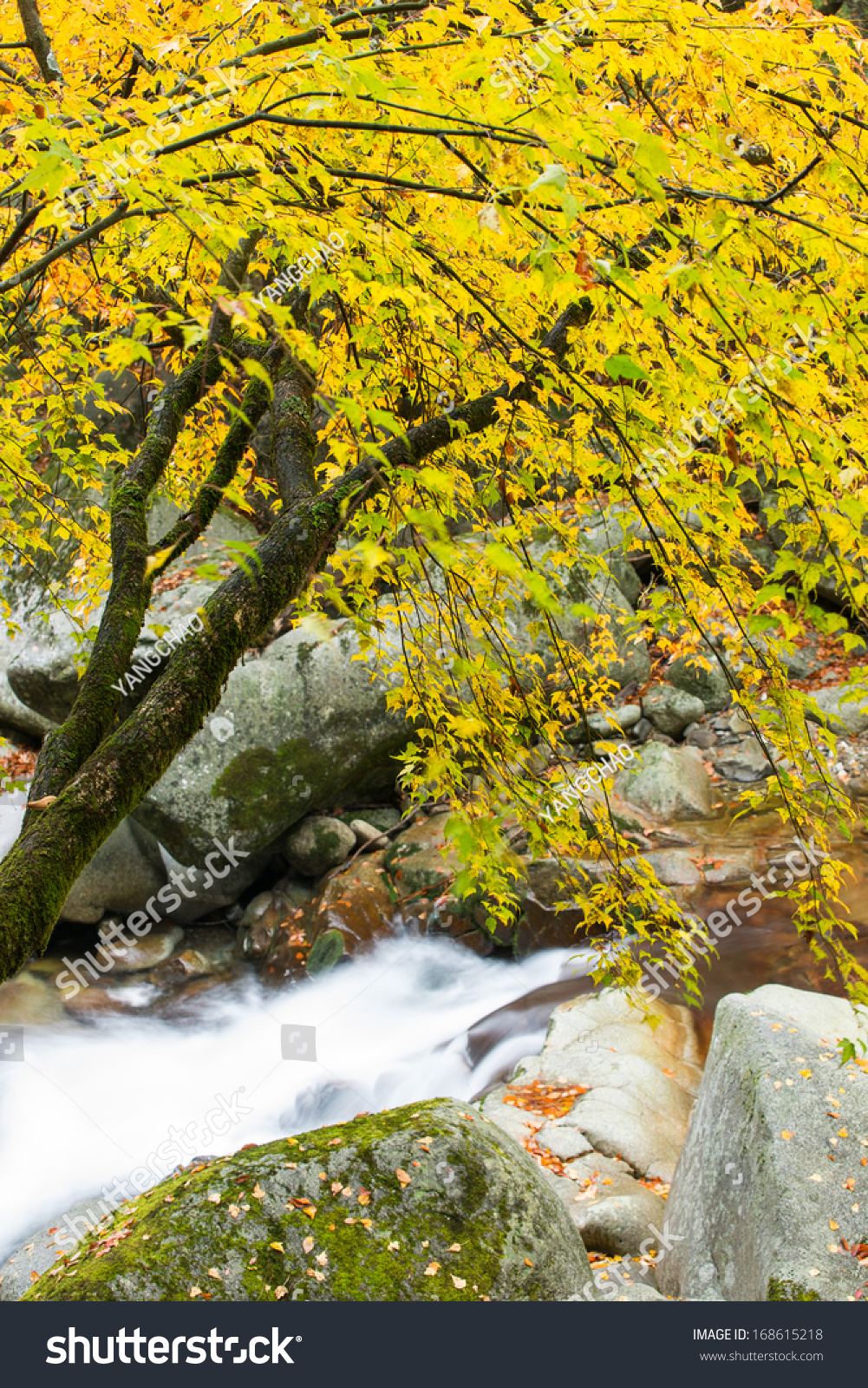 秋天,森林和小溪-自然,公园/户外-海洛创意(hellorf)图片