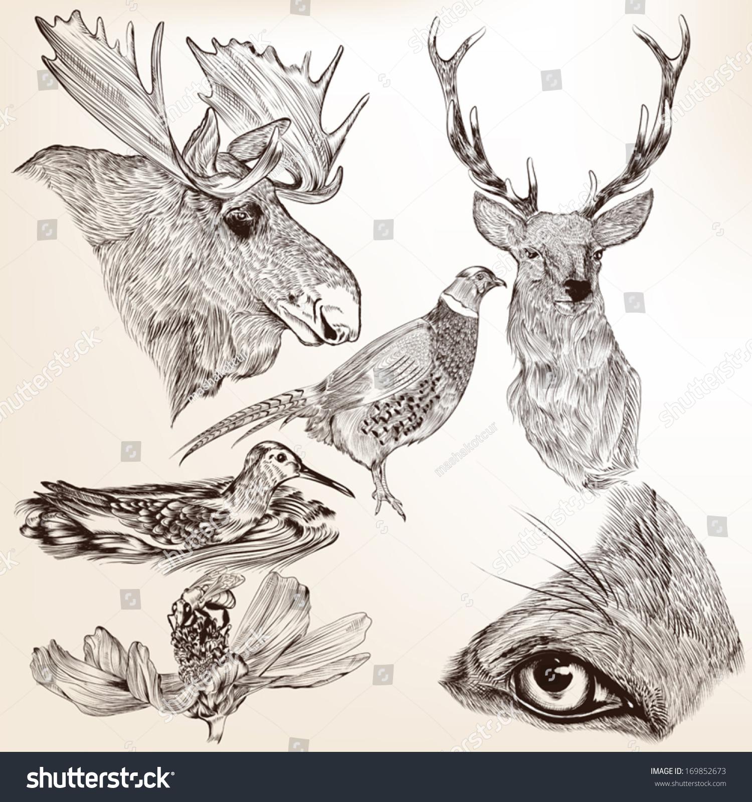 高的详细向量动物设计的集合-动物/野生生物-海洛