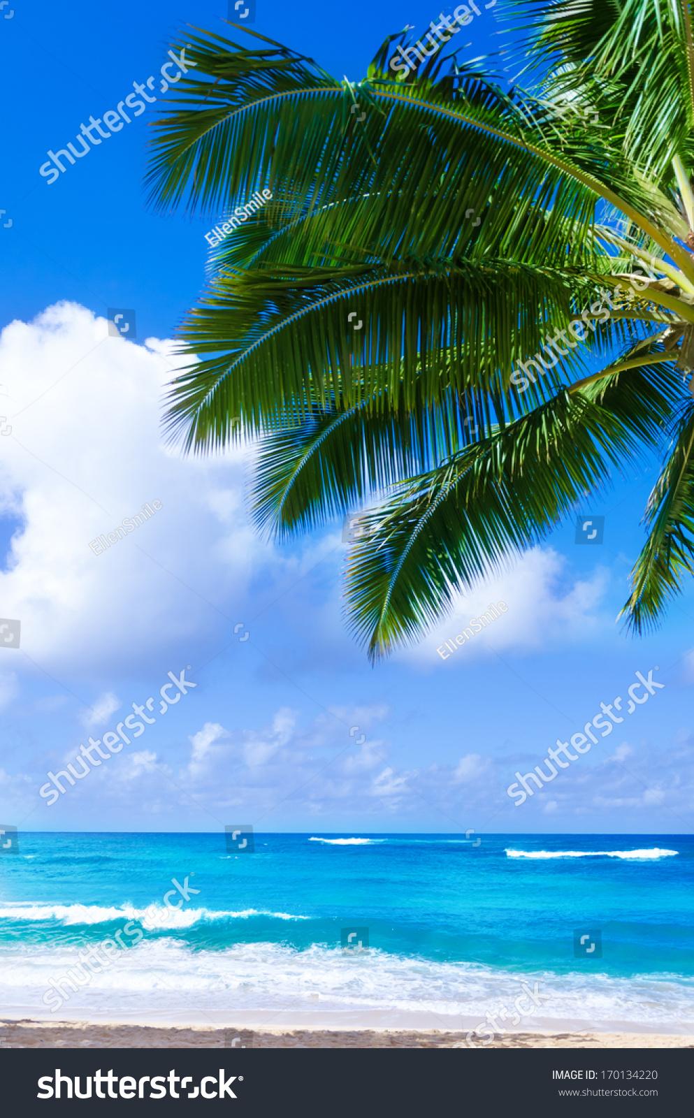微信头像海边树