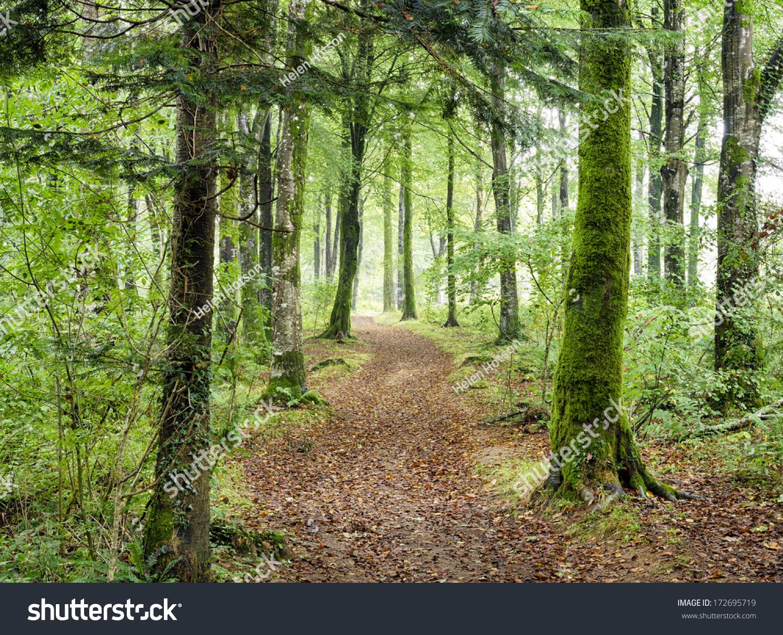 穿过树林茂密的绿色森林哈特小路走向在康沃尔.-自然