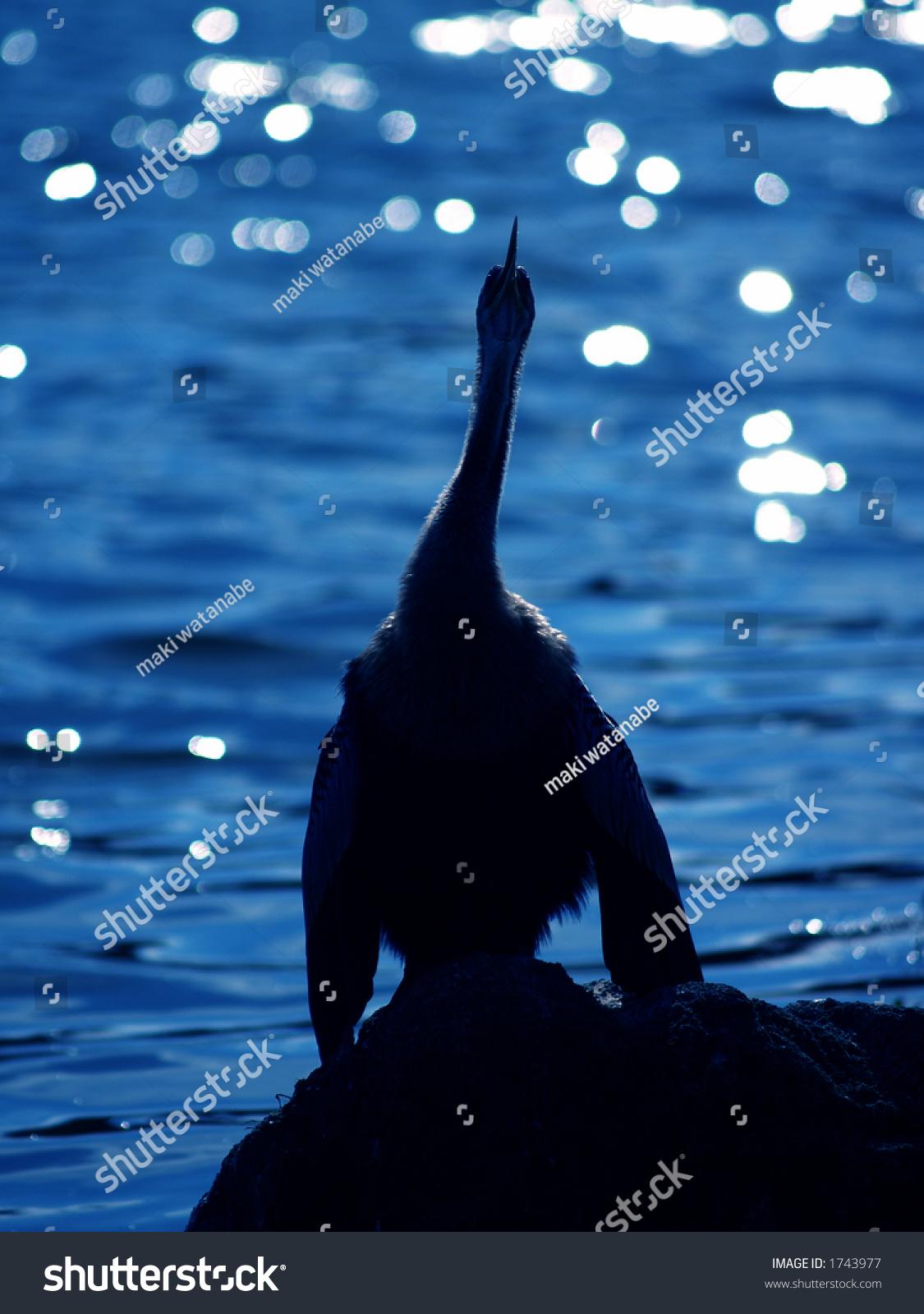 蓝色池塘-动物/野生生物