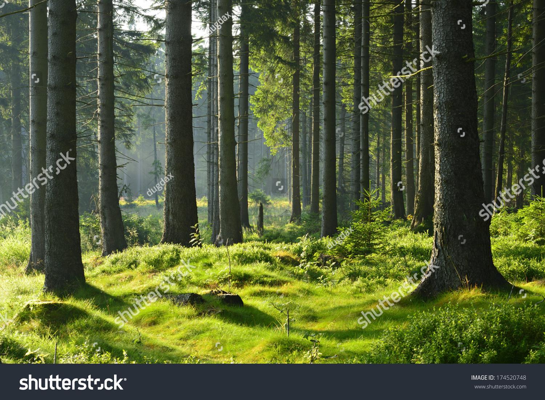 微信头像自然风景树林