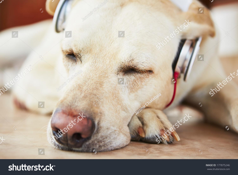可爱动物听歌头像