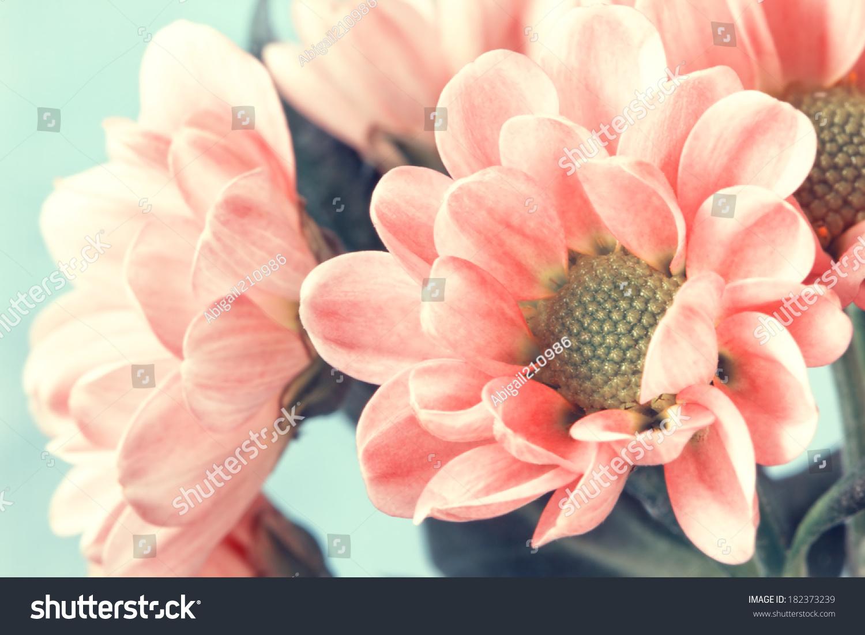 可爱的淡粉色的花朵在复古风格-自然