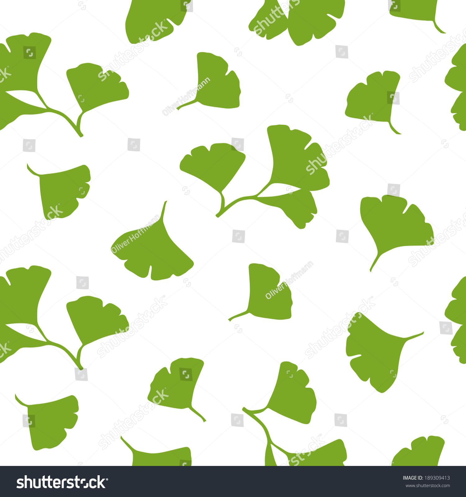 绿色的银杏树叶在白色背景上.