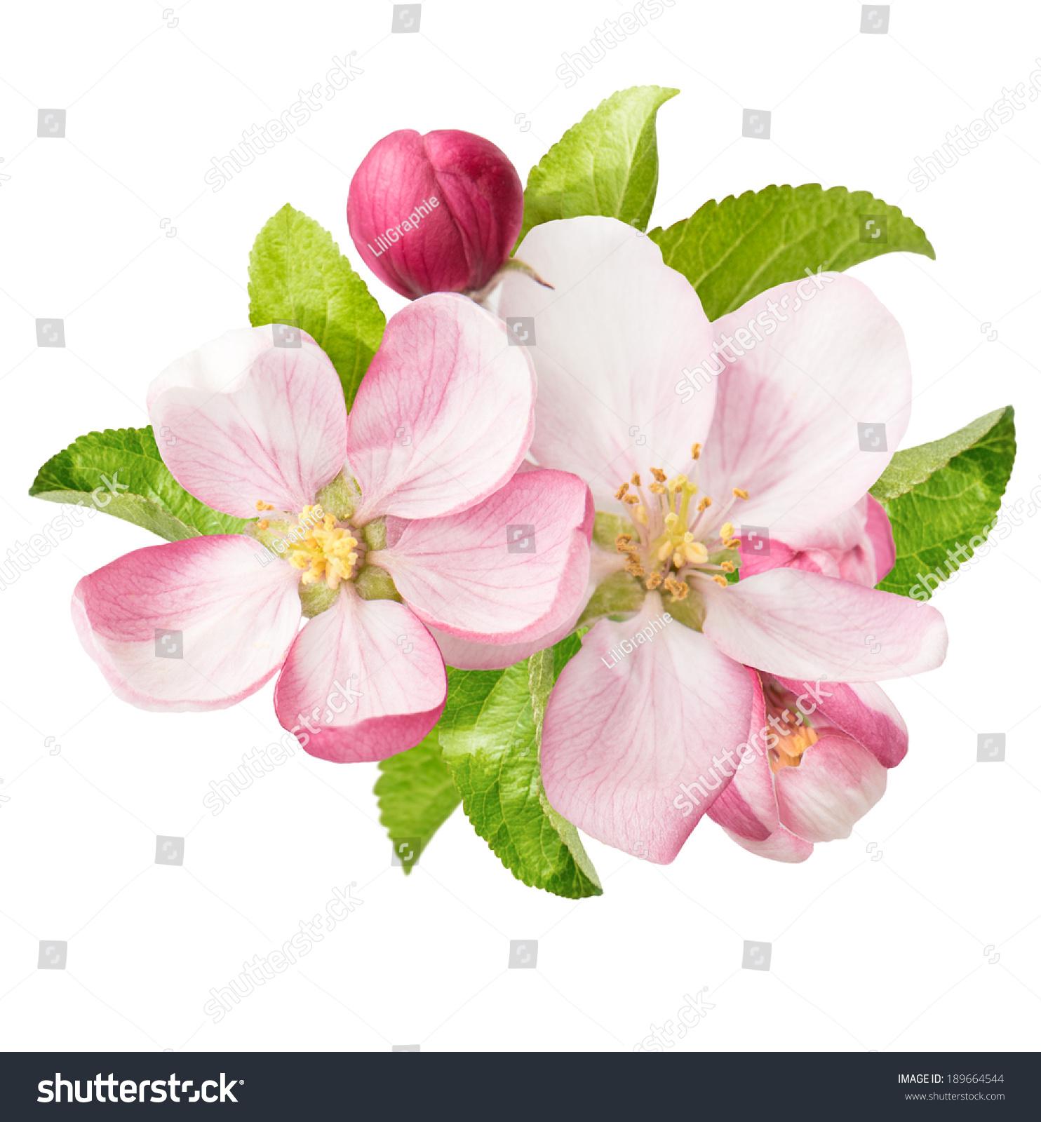 春天的花朵-自然,公园