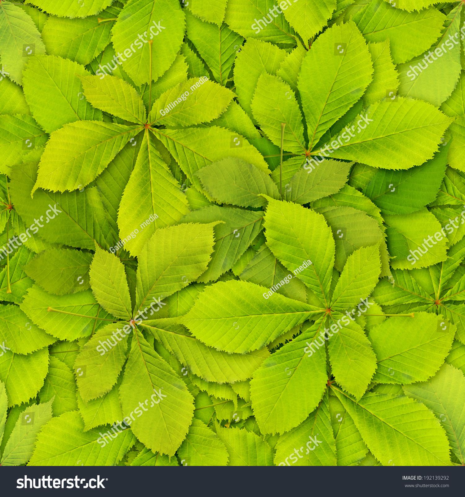 微信头像红花配绿叶