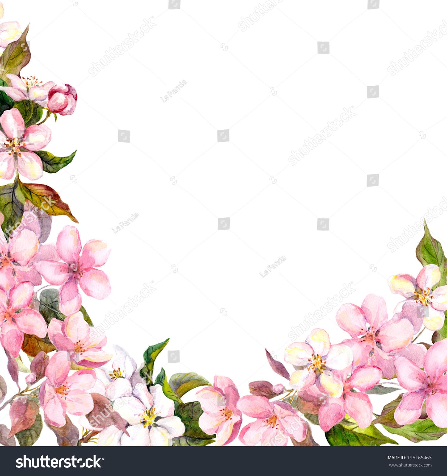 漂亮的花朵盛开的苹果.水彩画-背景/素材
