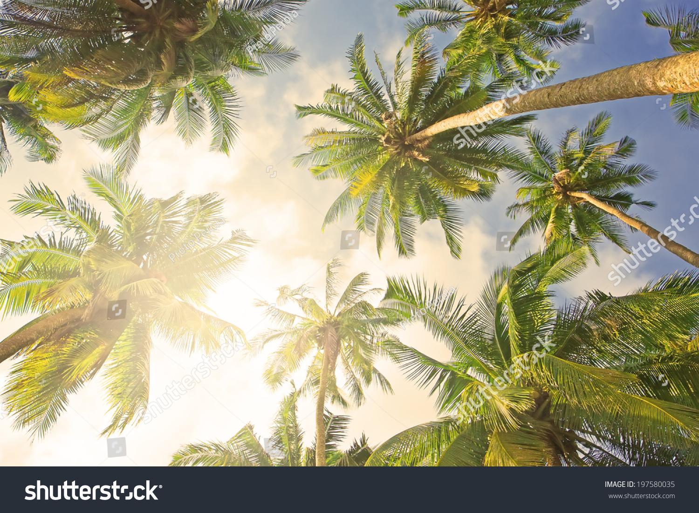 椰子棕榈树透视图