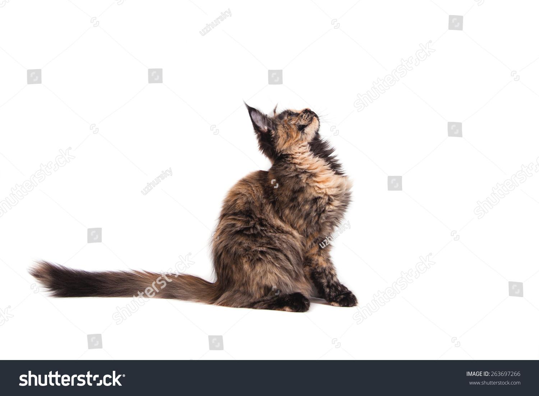 1 7的动物卡片