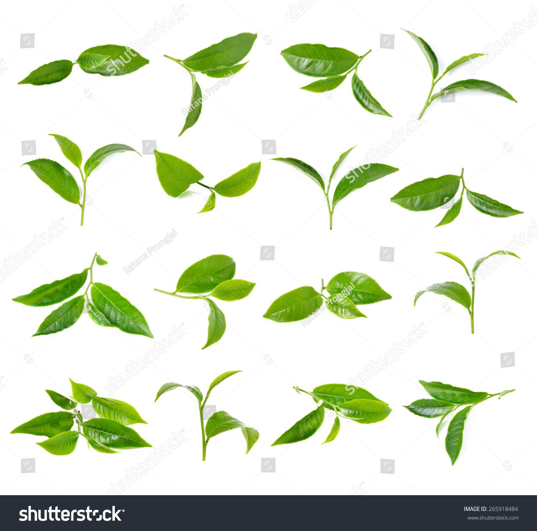 绿色的茶叶在白色背景上 - 食品及饮料,自然 - 站酷海洛创意正版图片,视频,音乐素材交易平台 - Shutterstock中国独家合作伙伴 - 站酷旗下品牌