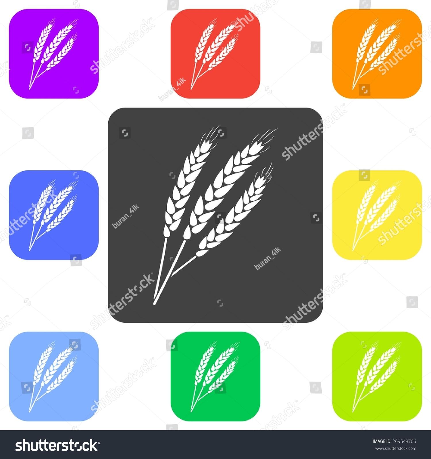 农业现代轮廓的矢量插图耳朵小麦图标(小麦).平的白色