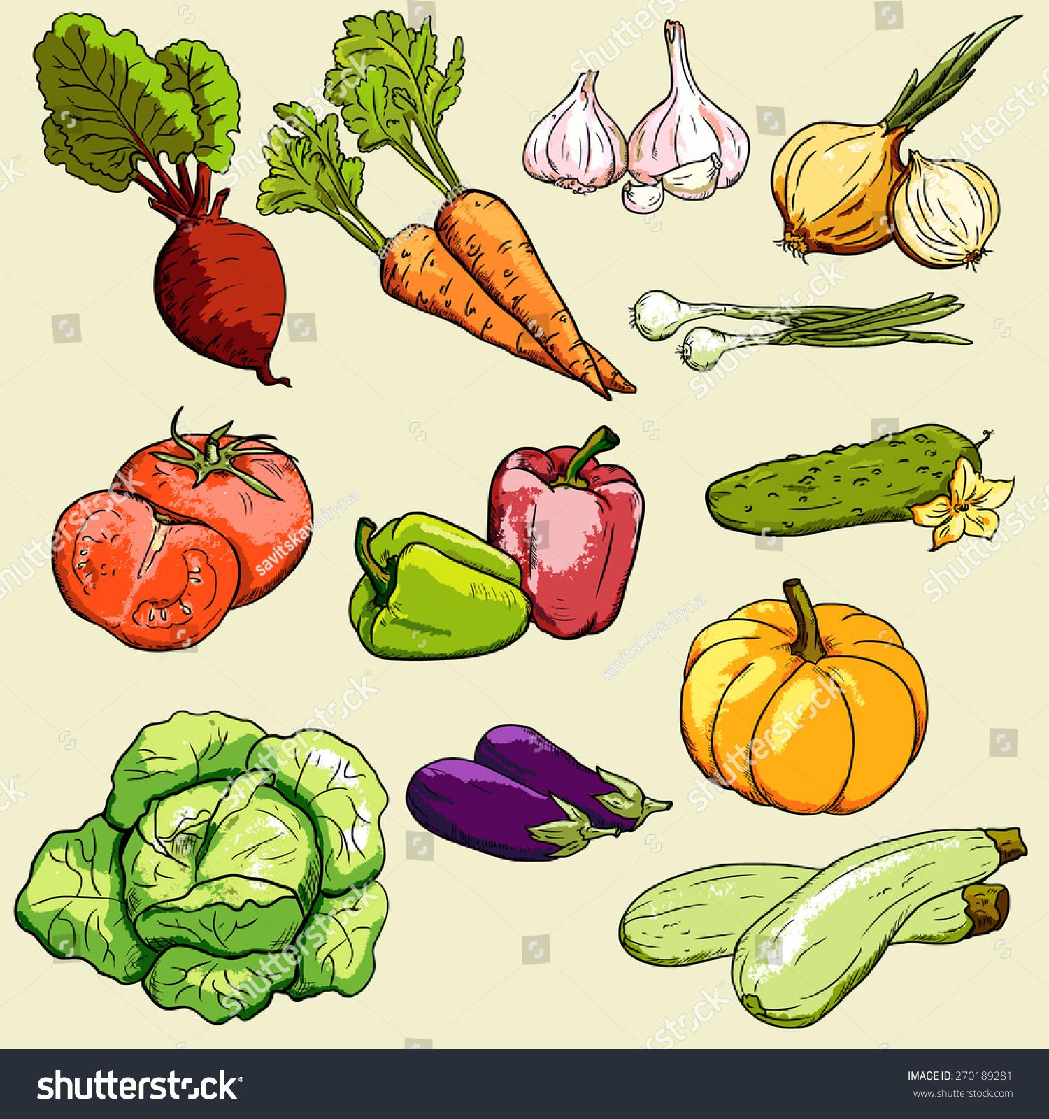 矢量采集蔬菜/蔬菜的颜色-食品及饮料,物体-海洛创意