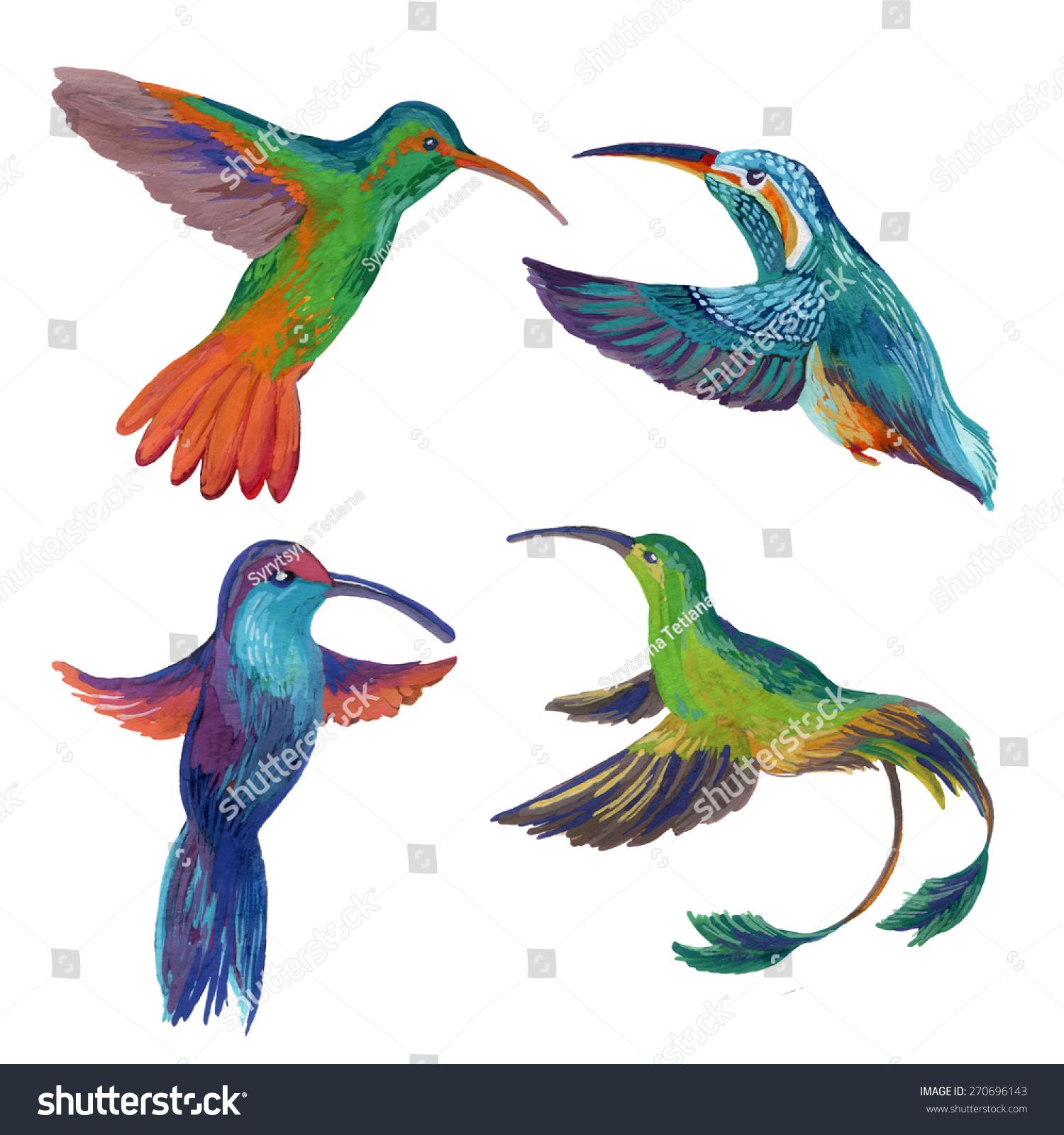 蜂鸟飞行的手绘插图-动物/野生生物