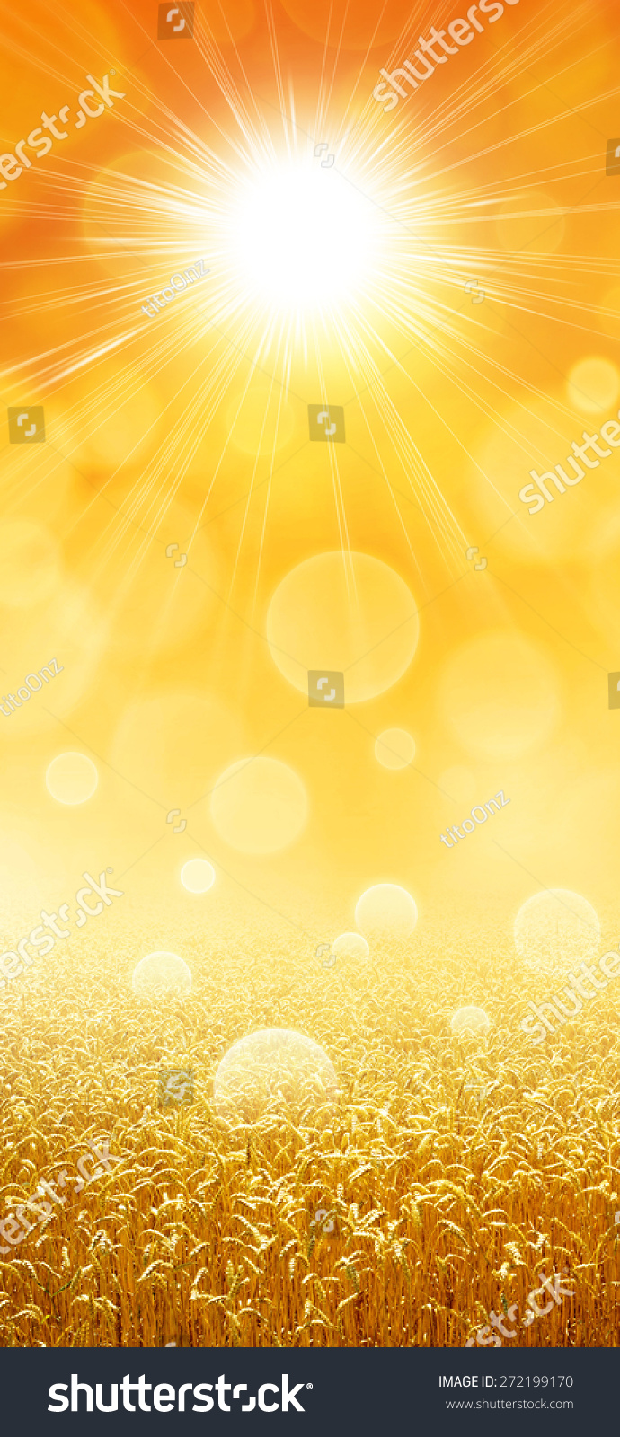 炎热的夏天的阳光下成长的麦田-背景/素材
