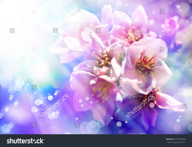 春天花背景与苹果树开花