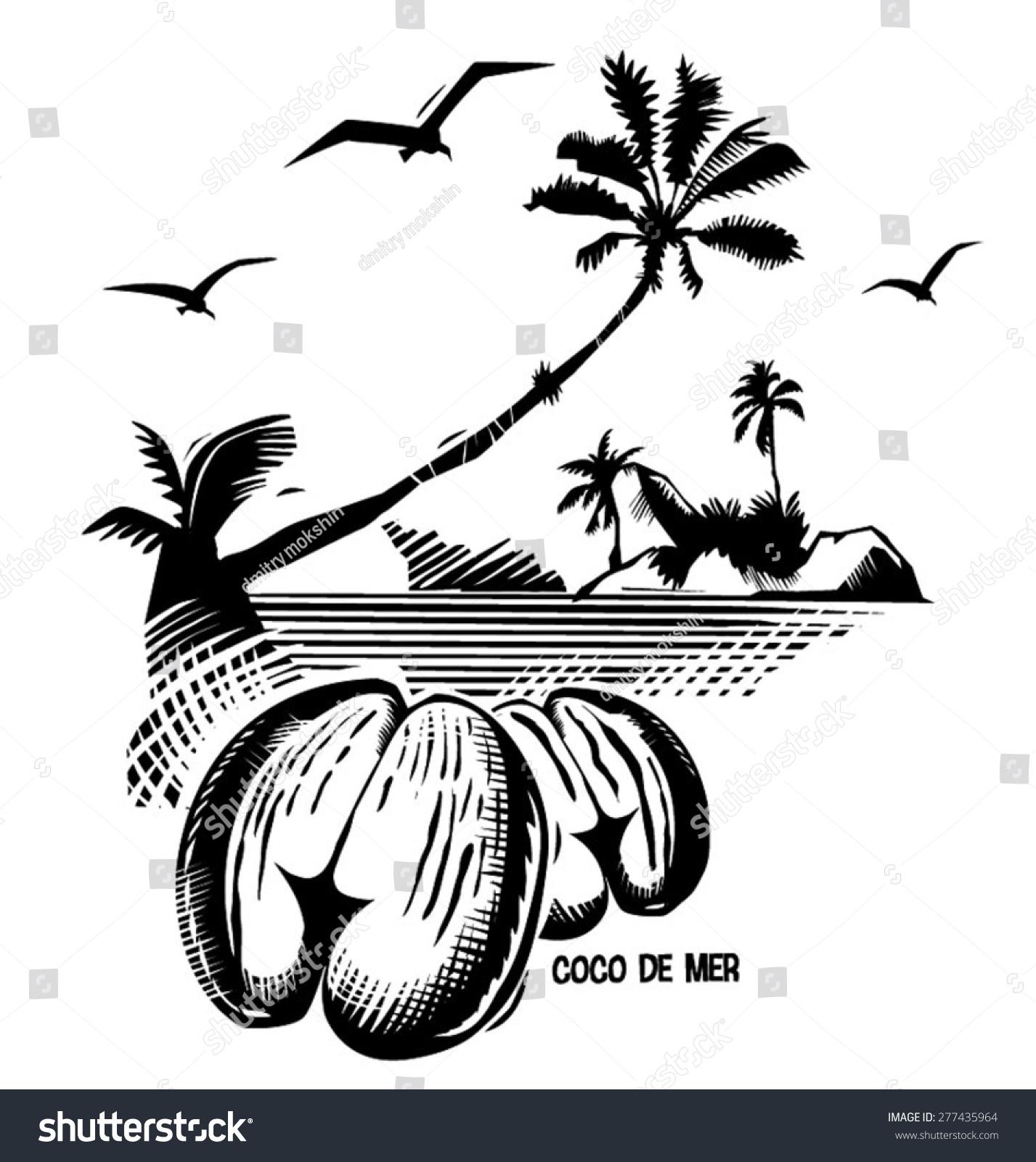 数字雕刻-黑白矢量线条画双椰子(塞舌尔螺母)-自然