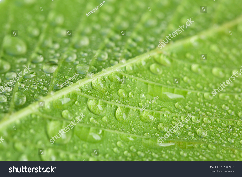高清綠色護眼微信壁紙-微信聊天護眼綠色壁紙,手機,.