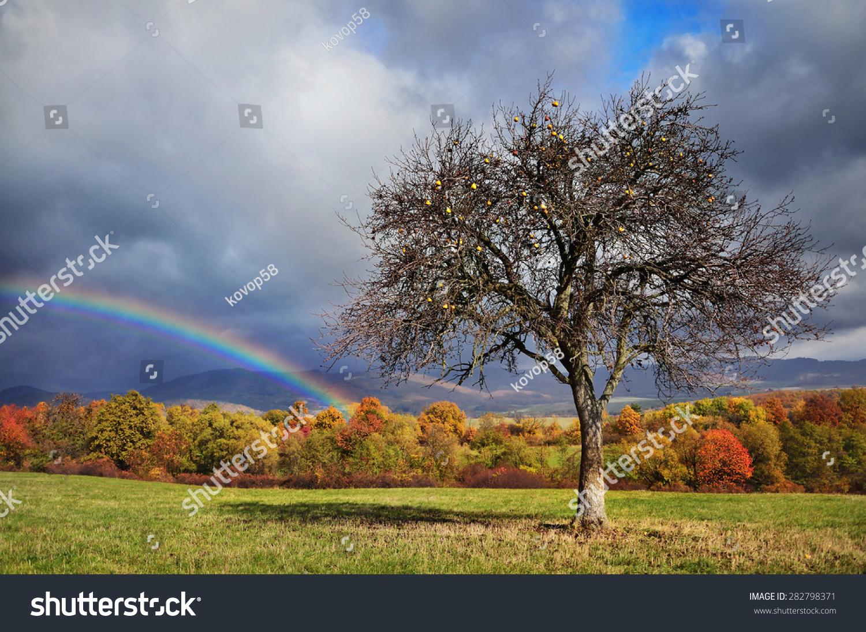 彩虹在秋天的苹果树