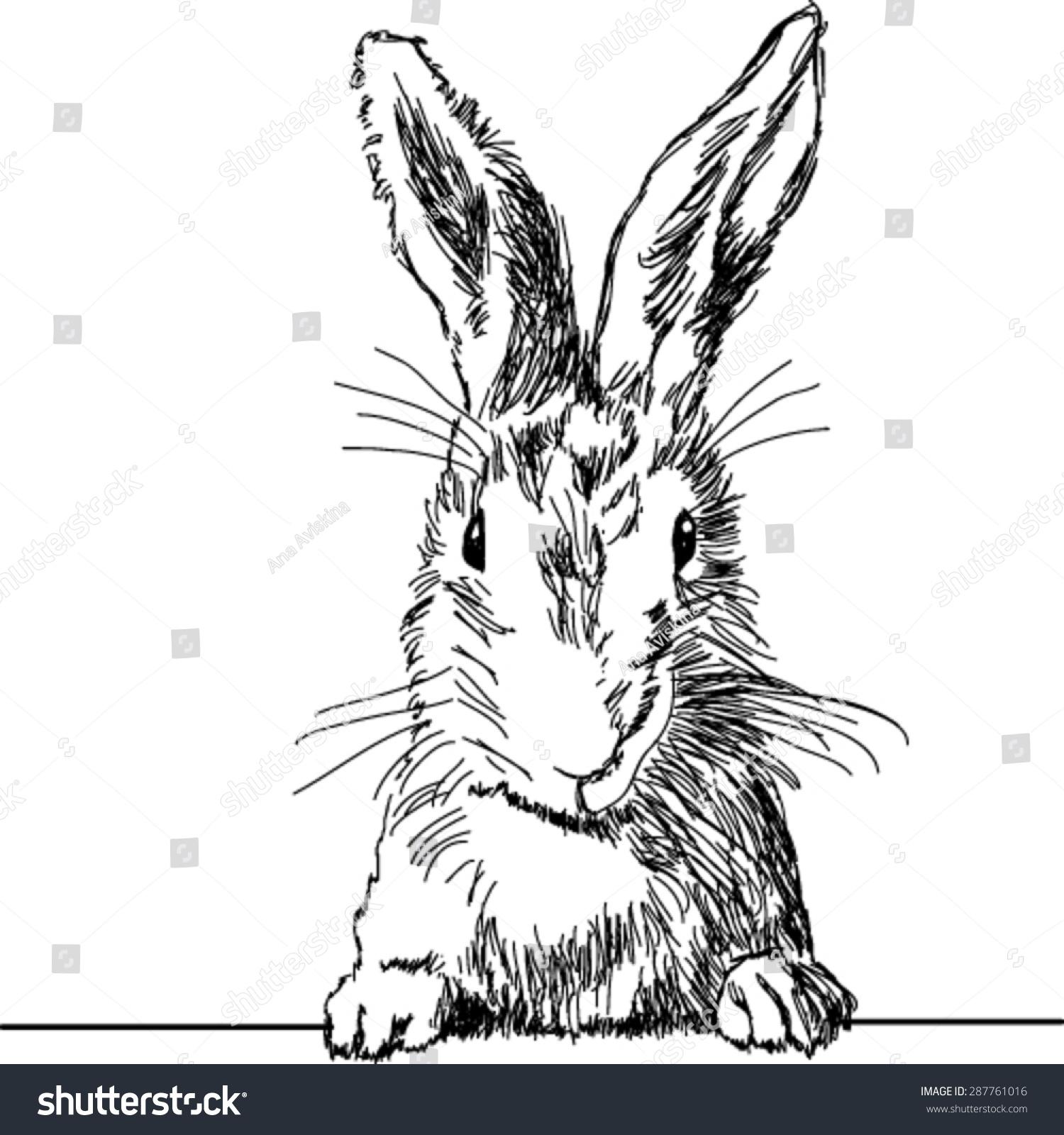 手绘可爱的兔子-动物/野生生物