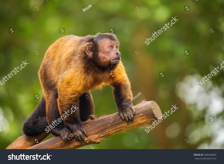 新加坡动物园-动物/野生生物