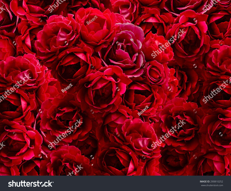 布什的红玫瑰鲜花的背景-背景/素材,自然-海洛创意()