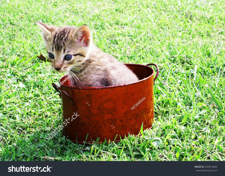 可爱的小猫咪在一个红色的锅里-动物/野生生物