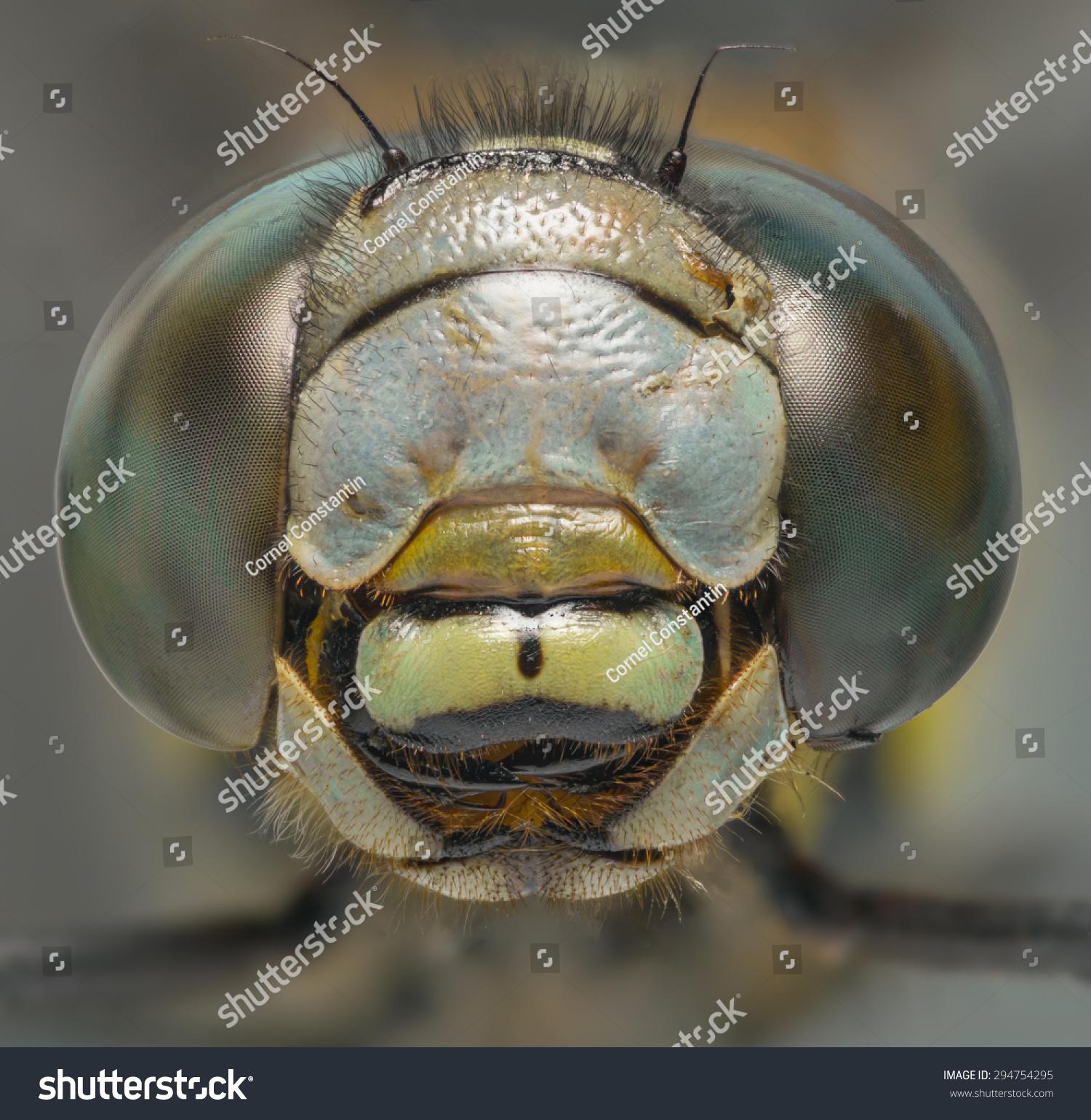 蜻蜓宏观的头开枪前视图-动物/野生生物,自然-海洛()
