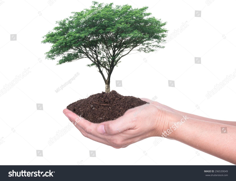 人手拿着大树生长在土壤上白色背景.-商业/金融,自然