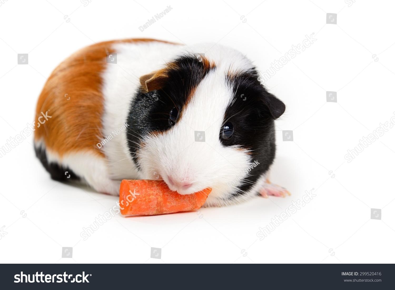 胡萝卜在白色背景上-动物