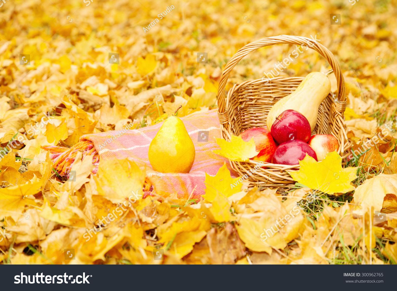 有机水果和蔬菜在格子上一篮子在秋天的公园.在一篮子图片