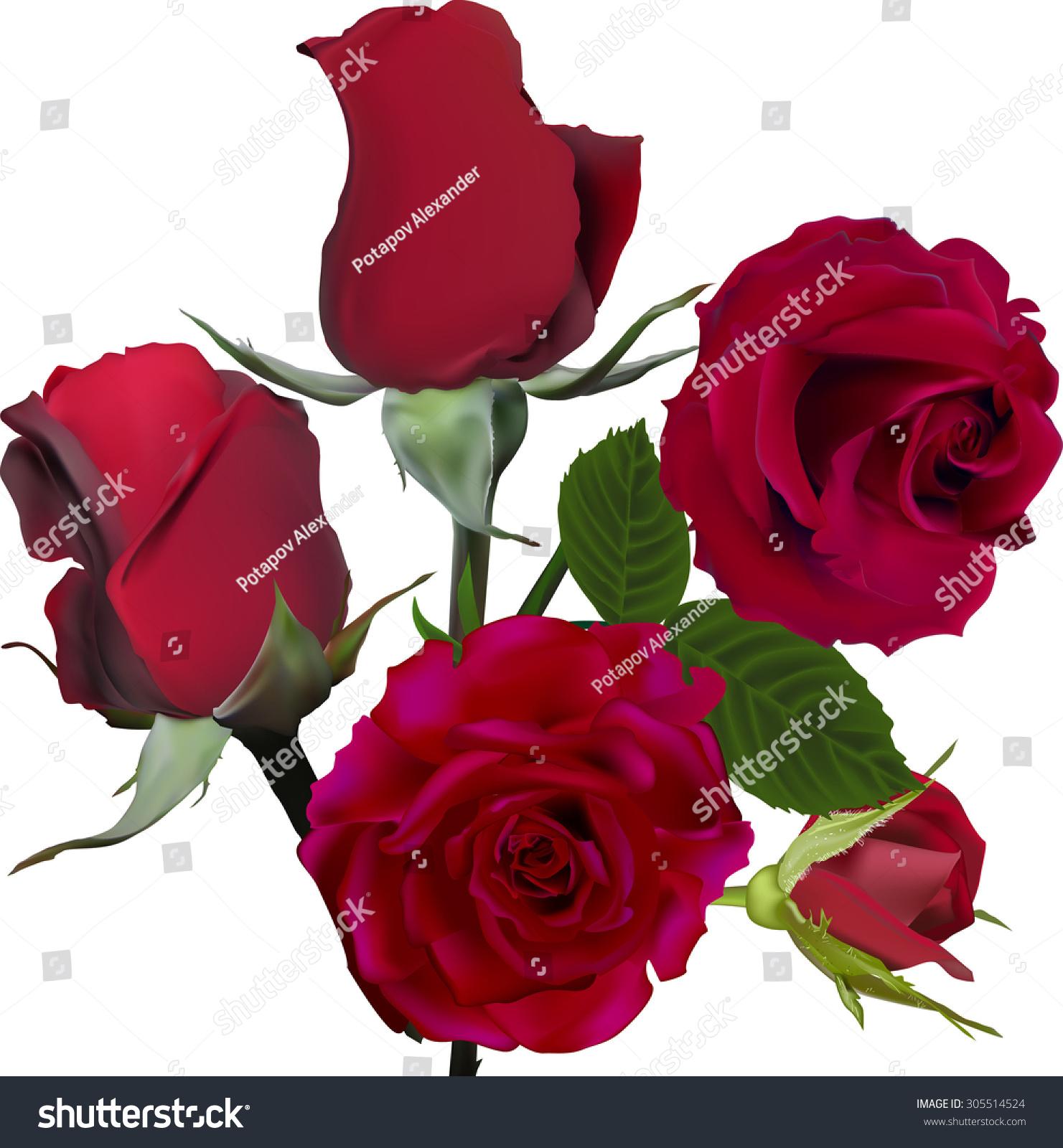 白色背景下玫瑰花的插图-自然-海洛创意(hellorf)--.