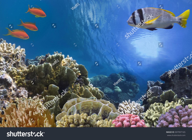 微信头像春天风景海底