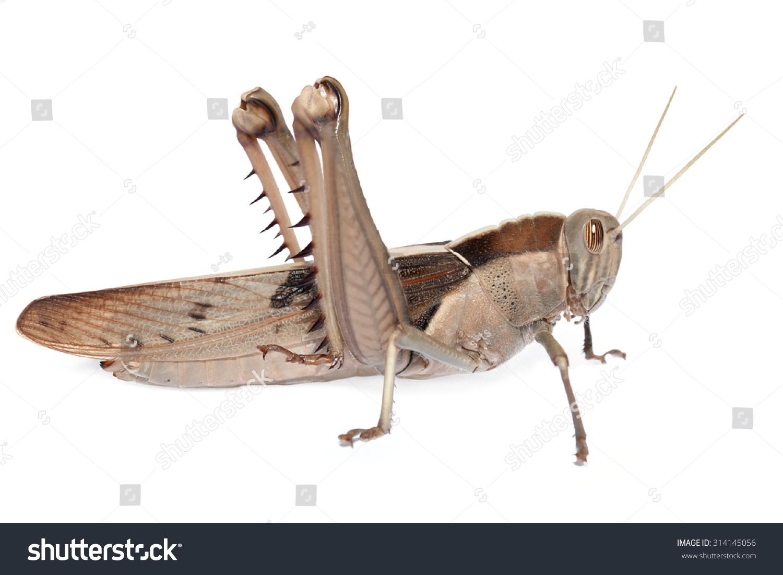 蝗虫纸飞机折法图解