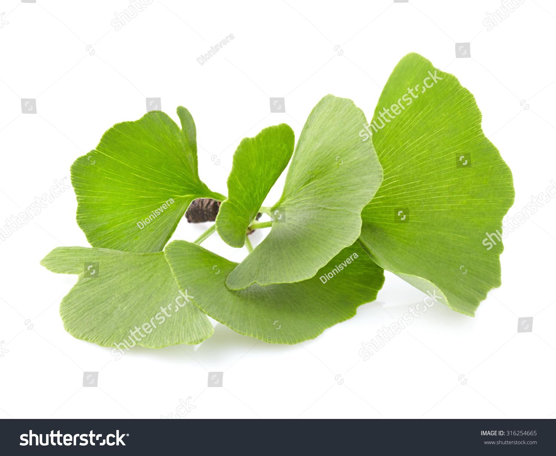 银杏的叶子-医疗保健,自然-海洛创意(hellorf)-中国-.