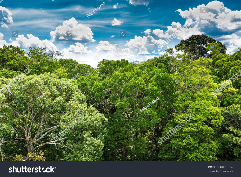 巴西的亚马逊森林-自然-海洛创意(hellorf)-中国独家