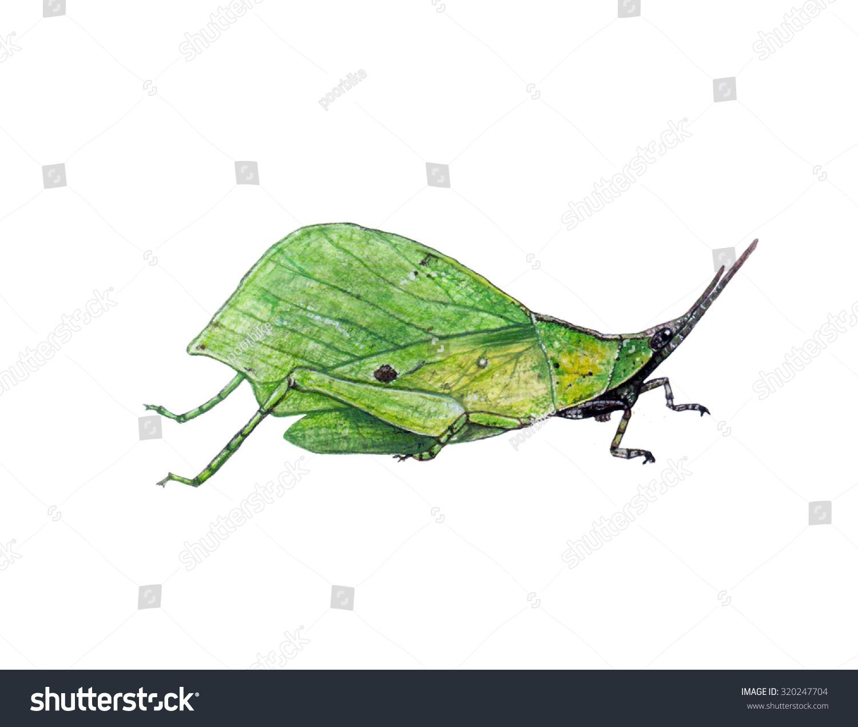 错误绘画/叶蝗虫/水彩画-动物/野生生物,公园/户外-()
